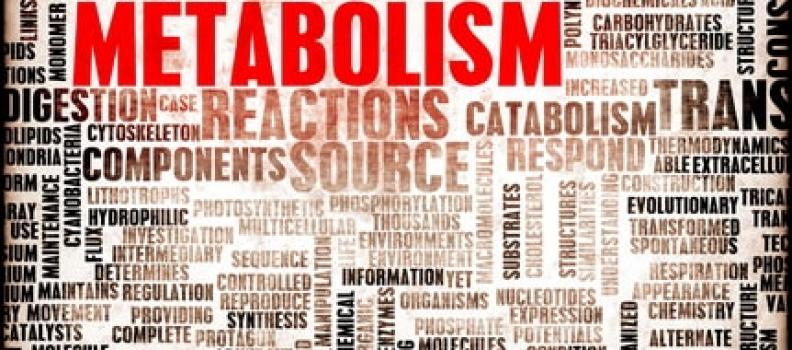 Pourquoi votre métabolisme est-il si important ?